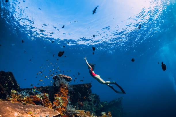 Free diver girl swimming underwater over wreck ship. Free diver girl swimming underwater over wreck ship. free diving stock pictures, royalty-free photos & images