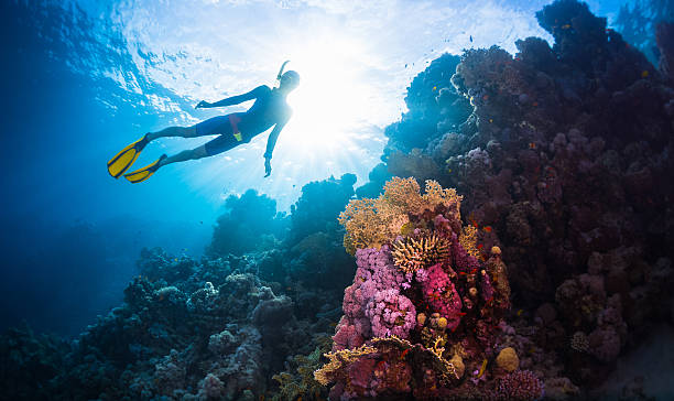 Free divers Free diver swimming underwater over vivid coral reef. Red Sea, Egypt wetsuit stock pictures, royalty-free photos & images