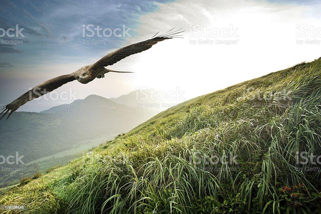 free flight stock photo