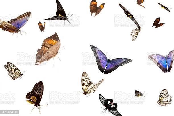 Free flight picture id471434149?b=1&k=6&m=471434149&s=612x612&h=if89ovudsfvlodf eq1upctas2duacyjhidrecyires=