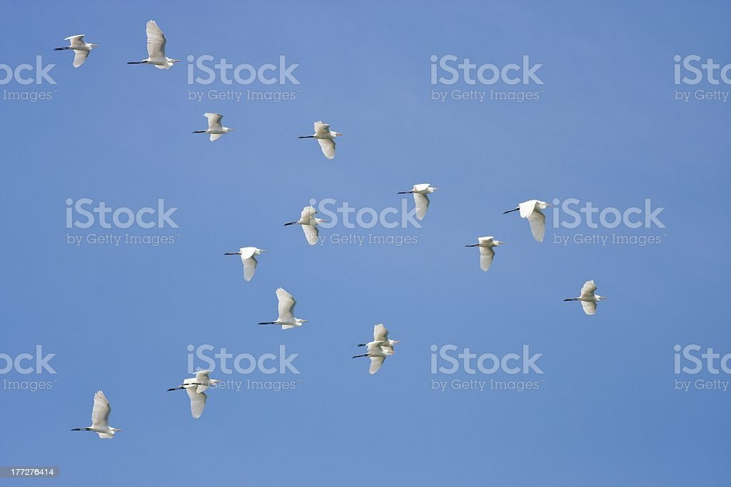 free flight with our wings royalty-free stock photo