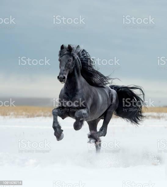 Free horses picture id1091526714?b=1&k=6&m=1091526714&s=612x612&h=dlll3unpxpuint1qrafrwl 8u5kq w8bfvke dmkxou=
