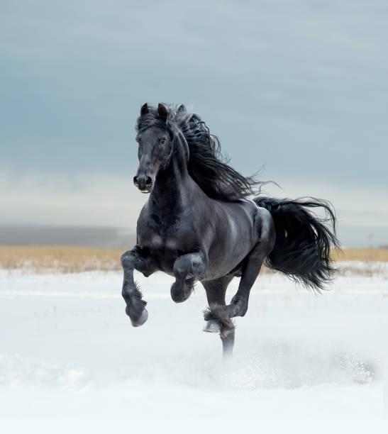 Free horses picture id1091526714?b=1&k=6&m=1091526714&s=612x612&w=0&h=pzkmsnuyw2v9x2wybebsjgkicv ziewsq3j5wcuokyk=