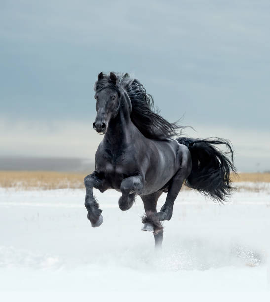 free horses free horses stallion stock pictures, royalty-free photos & images