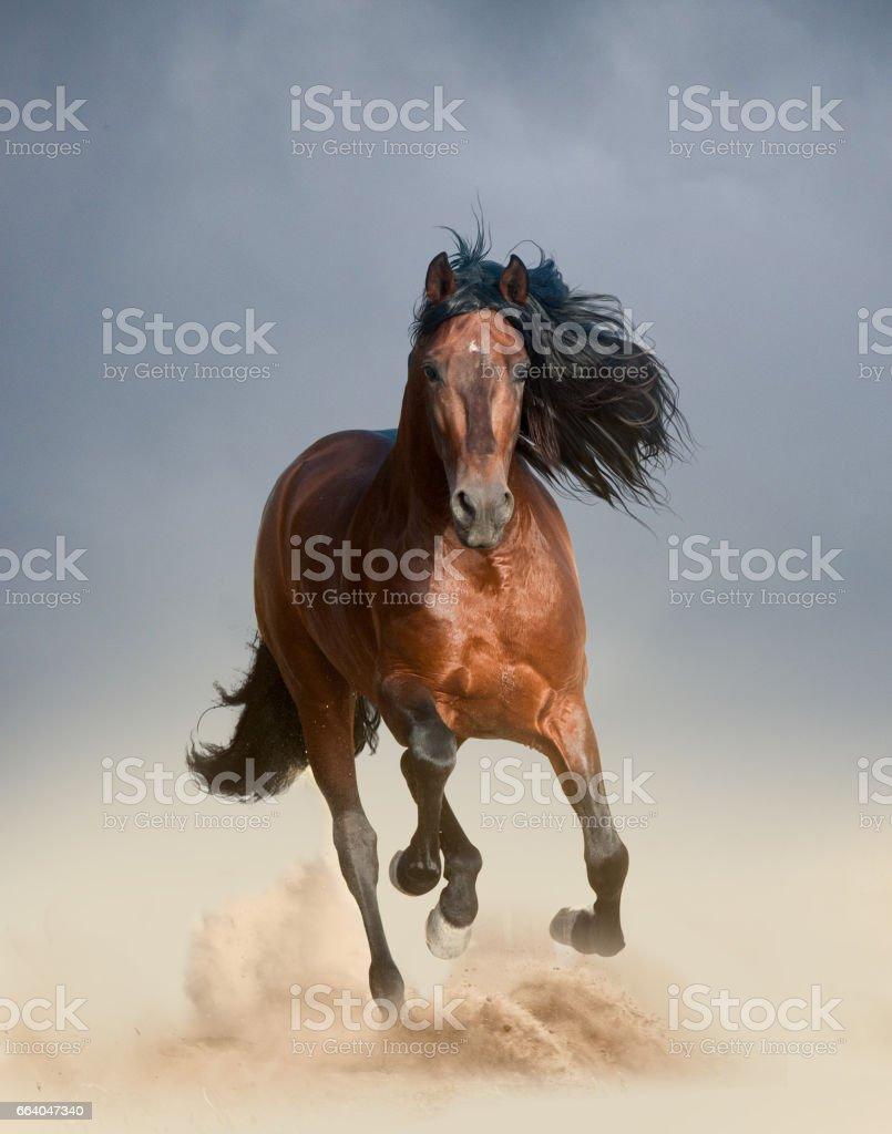 Free horses stock photo