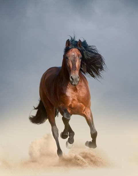 kostenlose pferde - andalusier pferd stock-fotos und bilder