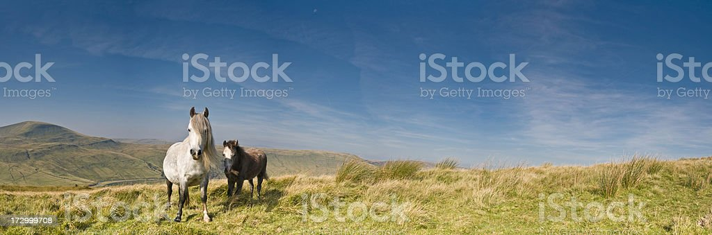 Free horses wild landscape stock photo