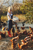 Young Woman Have Free Range Chicken Farm. She is taking care of chicken and feeding them.