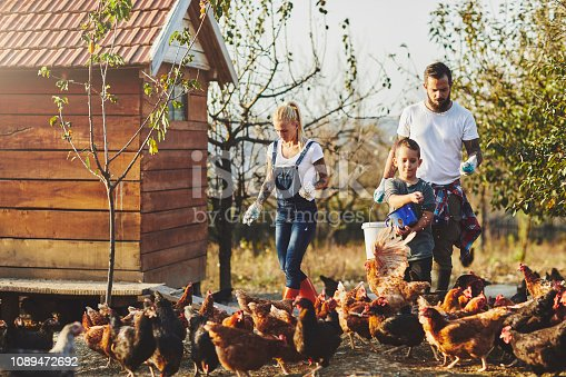 Young Family Have Free Range Chicken Farm. They are taking care of chicken, feeding them together.