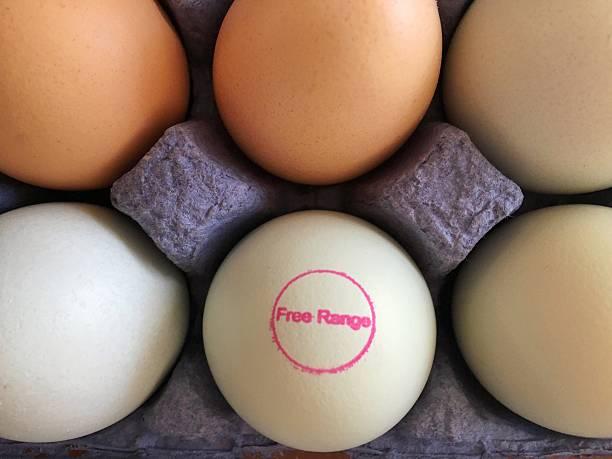 free range eggs - frigående bildbanksfoton och bilder