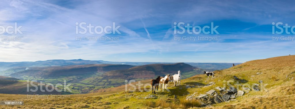 Free roaming horses in mountains stock photo