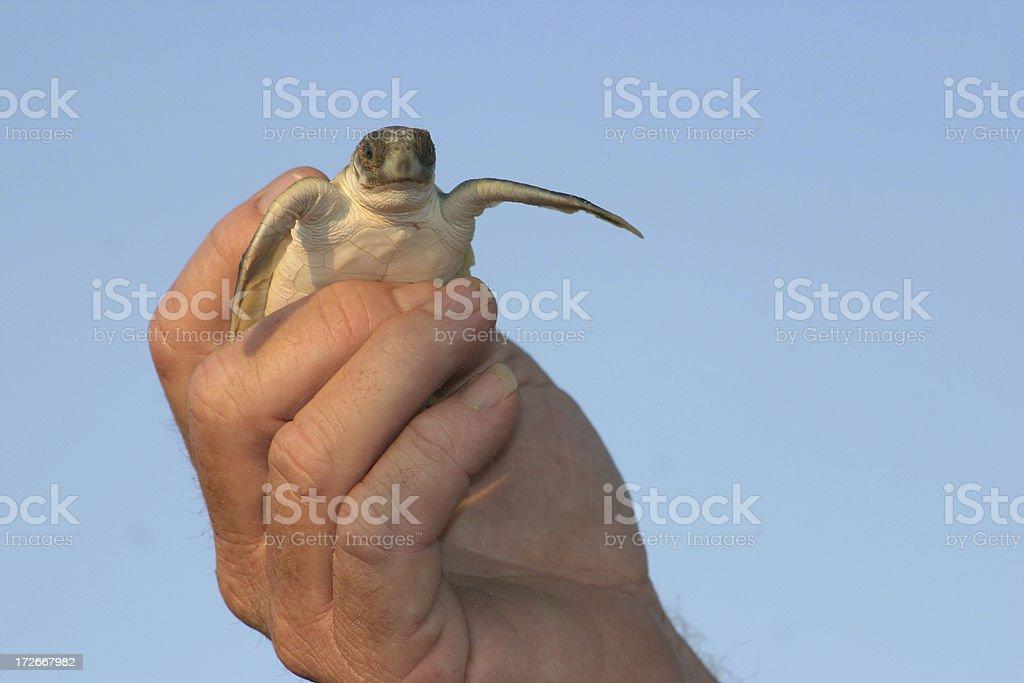 free turtle royalty-free stock photo