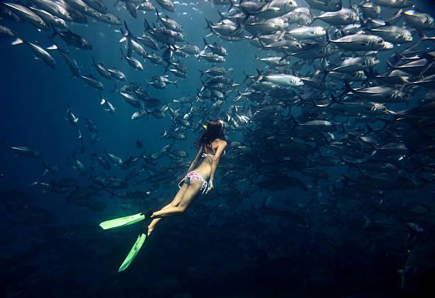 freediver and fish - freitauchen stock-fotos und bilder