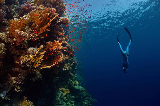 freediver im meer - freitauchen stock-fotos und bilder