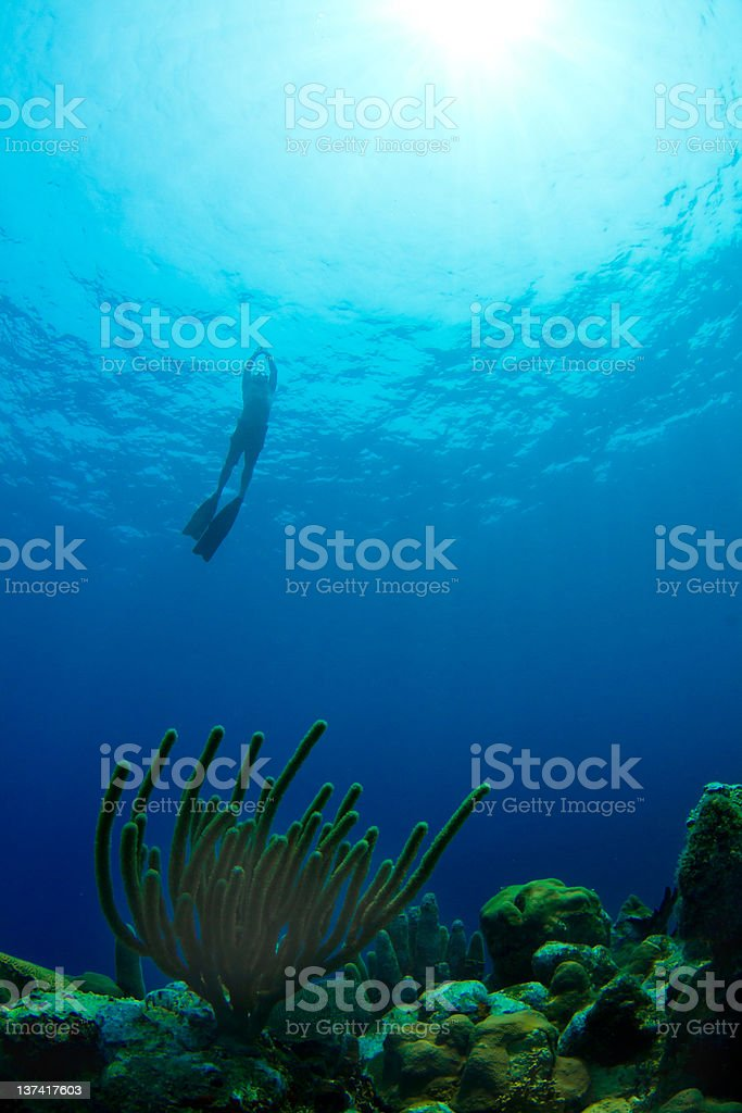 Freediving from a tropical reef in Honduras royalty-free stock photo