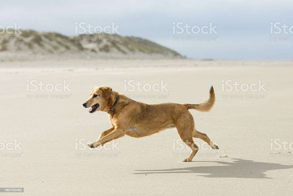 Freedom and fun royalty-free stock photo