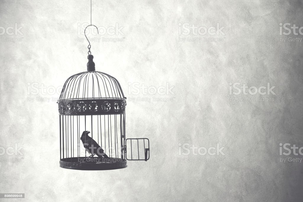 freedom concept, bird in an open cage stock photo