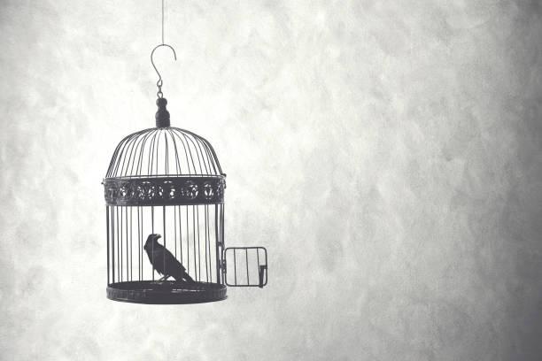 freiheit-konzept, vogel in einem offenen käfig - alles hinter sich lassen stock-fotos und bilder