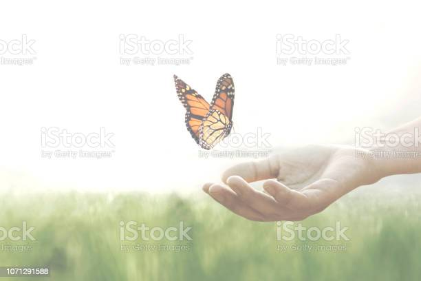Freedom concept colorful butterfly leans confident on a womans hands picture id1071291588?b=1&k=6&m=1071291588&s=612x612&h=ir5qqgiyktaxc0 pafp2ynkdapl63rj8ryzcor7aqwu=