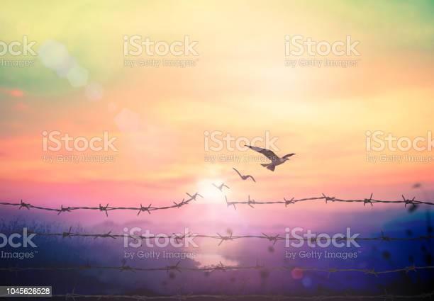 Freedom concept picture id1045626528?b=1&k=6&m=1045626528&s=612x612&h=u93lsy5l9nc0hldpy54szrr27aet6jcqxsyvf 0ypxa=
