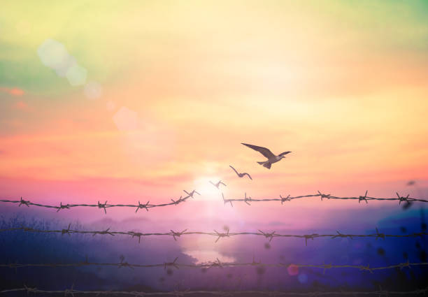 Freedom concept Silhouette of bird flying and broken barbed wire at beautiful mountain sky autumn sunset background hope concept stock pictures, royalty-free photos & images