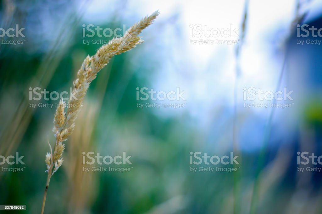 Freedom in Summer stock photo