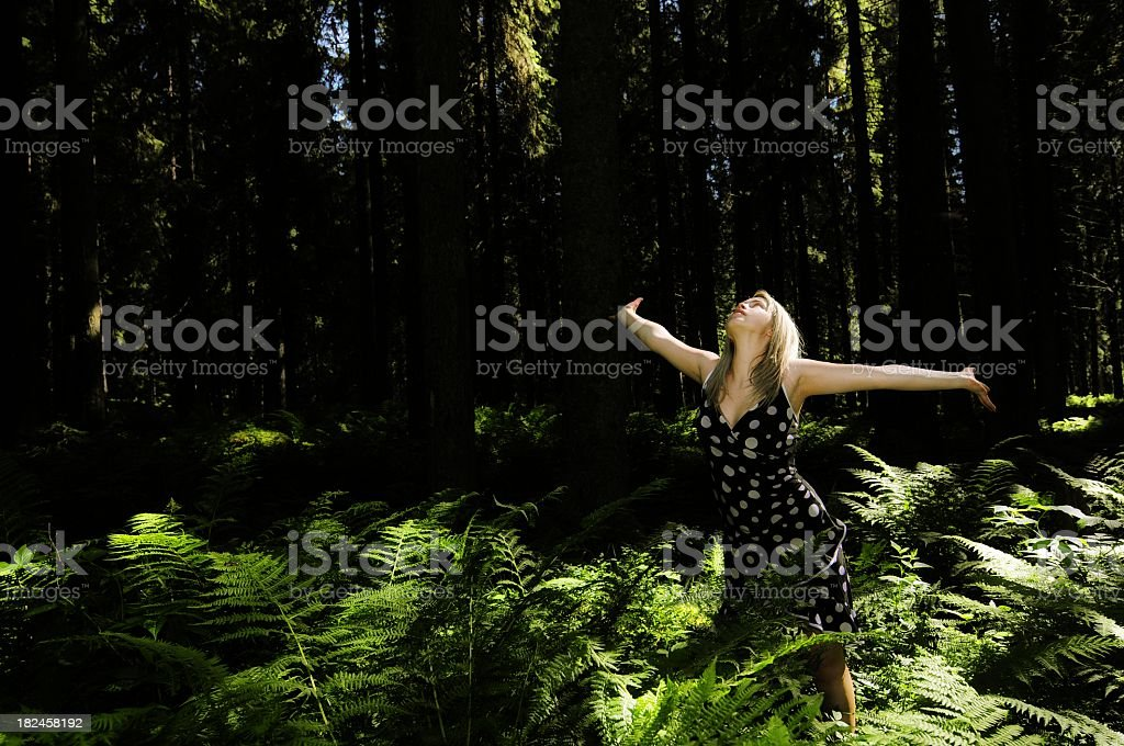 freedom in the forest royalty-free stock photo