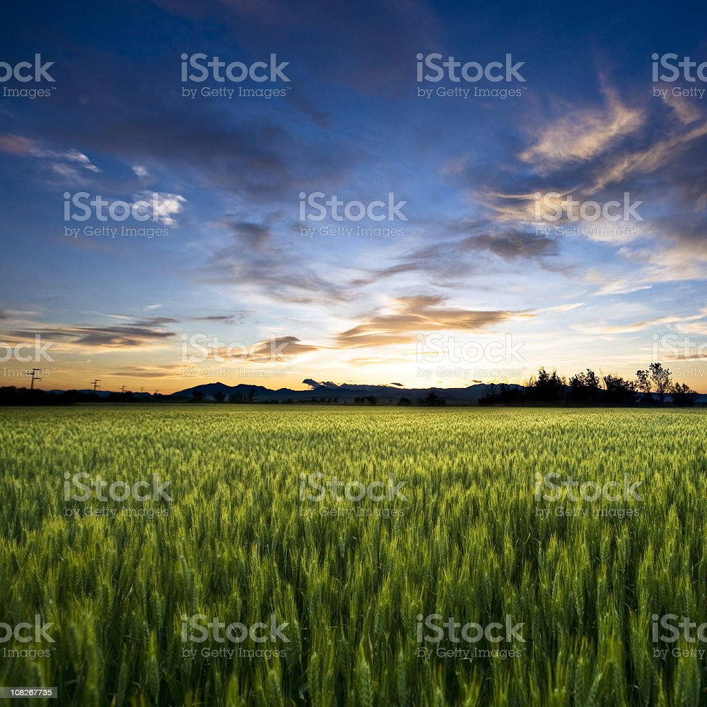 Freedom land royalty-free stock photo