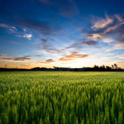 Freedom Land Stock Photo - Download Image Now