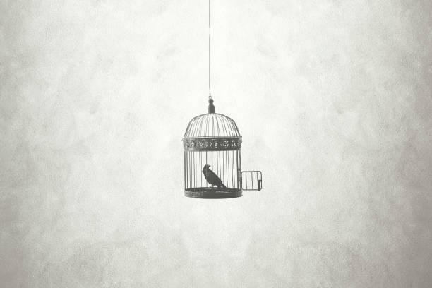 vrijheid minimale concept, vogel in een open kooi - kooi stockfoto's en -beelden