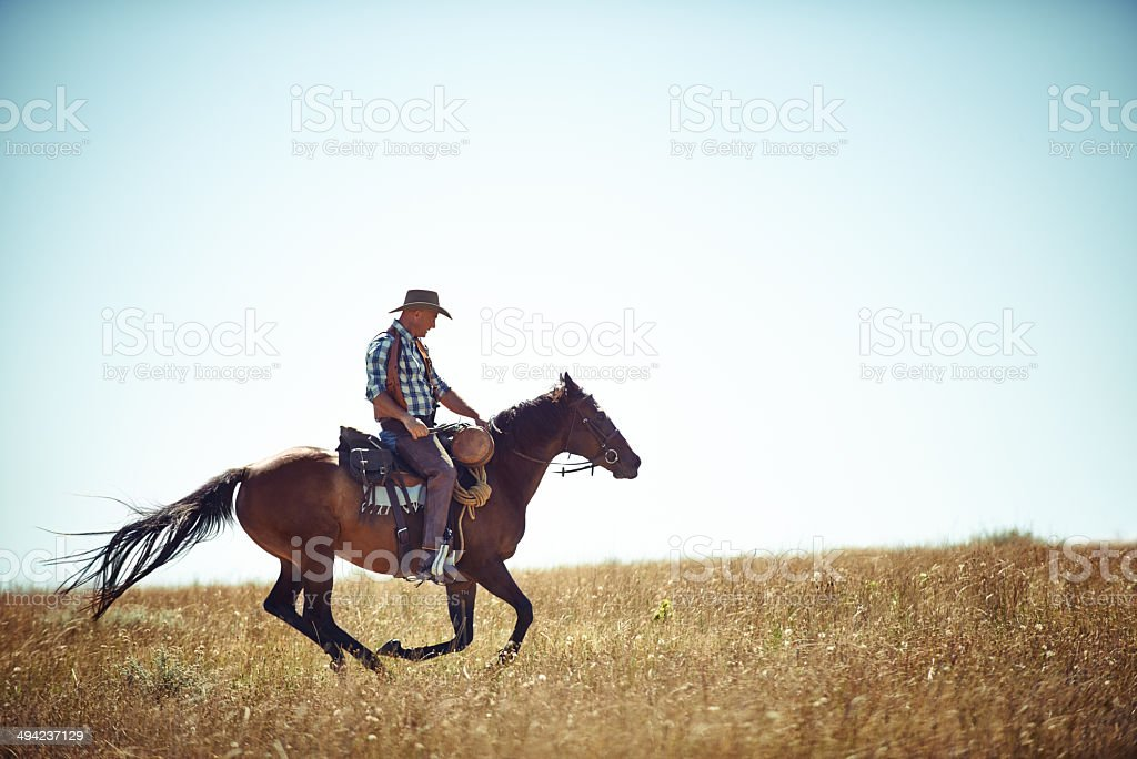 Freedom on the open fields stock photo