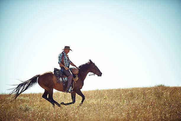 自由のフィールドにオープン - 乗馬 ストックフォトと画像