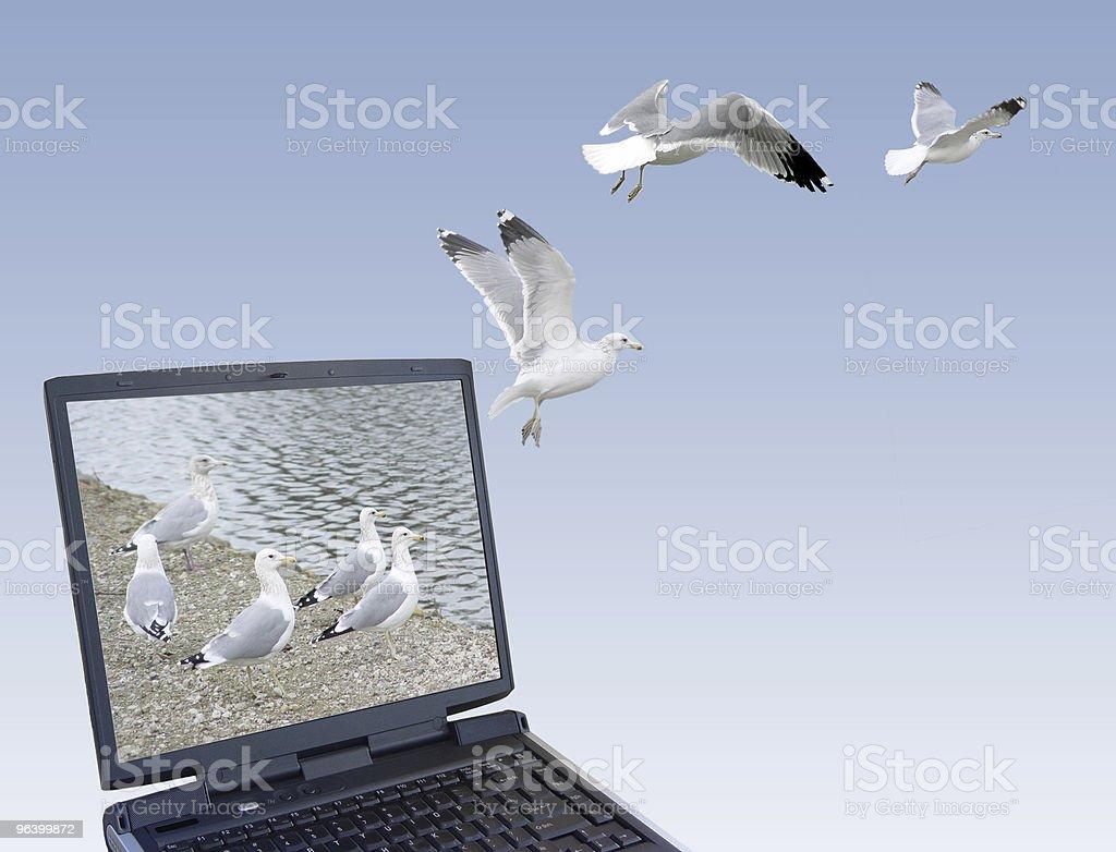 Freedom royalty-free stock photo