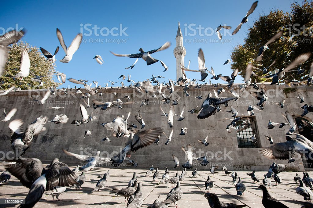 Freedom, Religion and Peace. Pigeons at Islamic Mosque flying Skywards royalty-free stock photo
