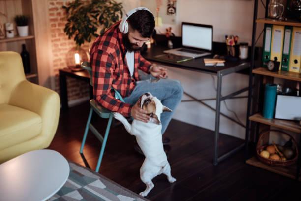 freelance, trabajando desde casa y jugando con su perro - trabajo freelance fotografías e imágenes de stock