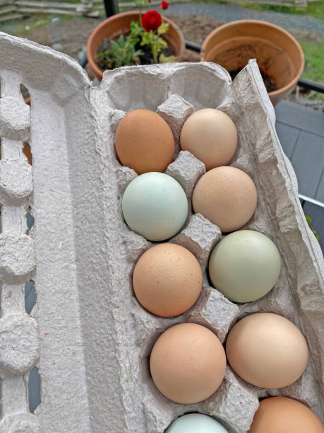 Free-Range eggs stock photo