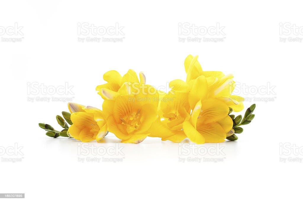 Freesia flowers laying down stock photo