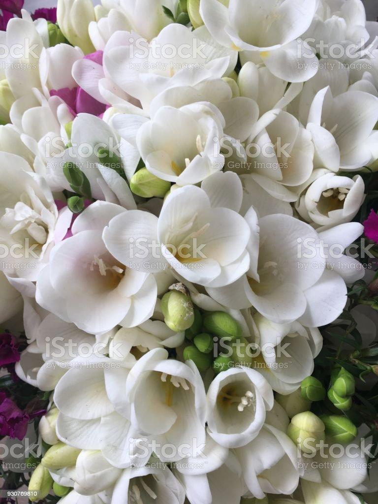 小蒼蘭, 芬芳的花朵圖像檔