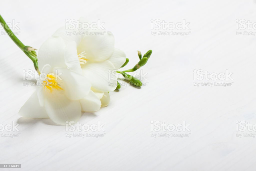 freesia on the light background стоковое фото