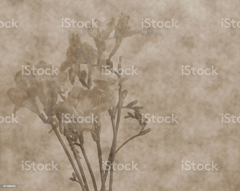 freesia scrapbooking  background royalty-free stock photo