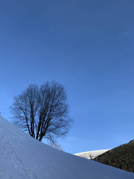 Cтоковое фото Freestanding tree in winter with snow covered landscape against blue sky
