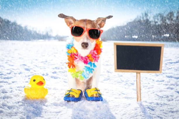 eiskalten eisigen Hund im Schnee – Foto