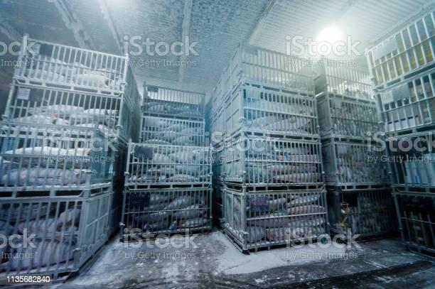 Freezing storage of tuna picture id1135682840?b=1&k=6&m=1135682840&s=612x612&h=jcexdlb8goi0azodgsps7wkljvasxilsfkfeeenx7aa=