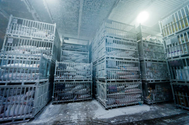 Freezing storage of tuna In Japan, tuna is a very popular fish, and those caught in the near seas are rushed to the market, but those caught in the ocean are frozen on board and stored in a freezer. tuna seafood stock pictures, royalty-free photos & images