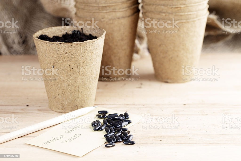 French Bean Seeds and Pots stock photo