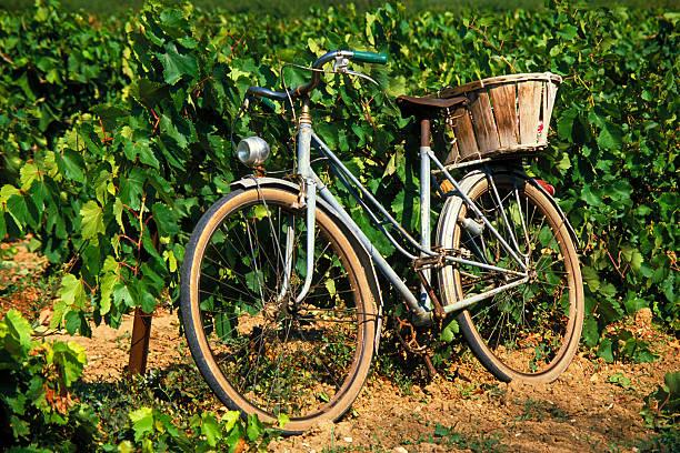 französische fahrrad im vineyard - bordeaux wein stock-fotos und bilder