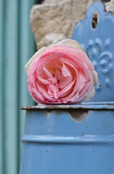 blaue französische zinn und pik rose shabby chic - zinn hochzeit stock-fotos und bilder