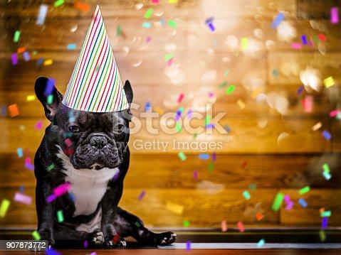 French Bulldog at party