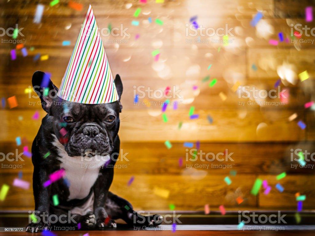 French Bulldog at party stock photo