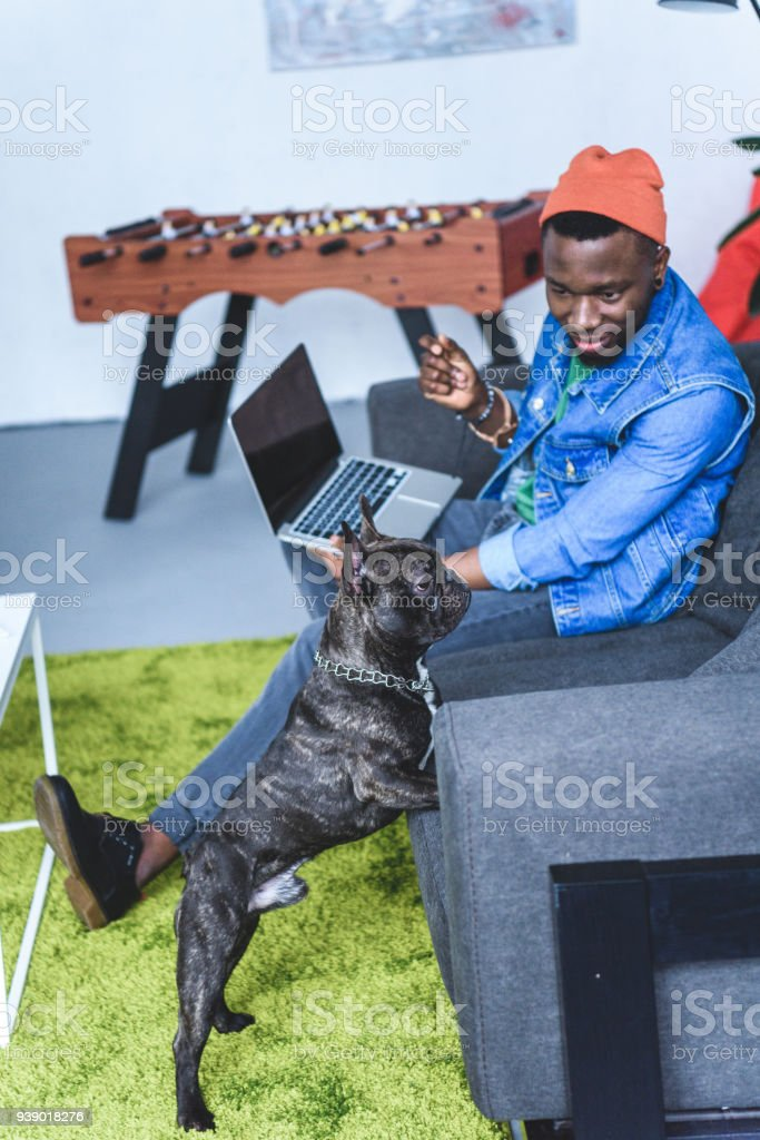 French bulldog by African american man sitting on sofa with laptop stock photo